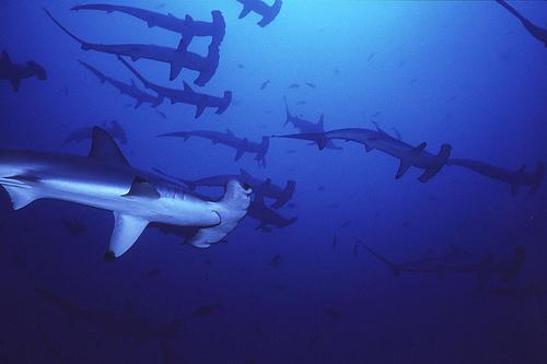 Image credit: Seawatch.org (Source: Wikipedia)