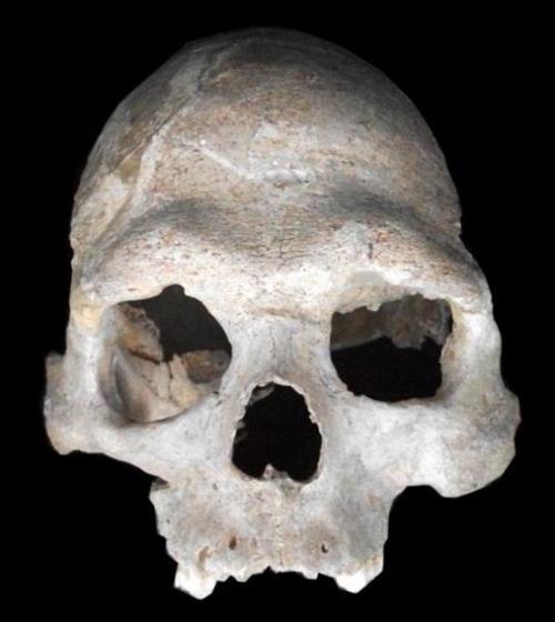 Schädel des ungefähr 8.000 Jahre alten männlichen Jägers und Sammlers von der Loschbour-Fundstelle in Luxemburg, dessen Genom sequenziert wurde. Bild credit: Dominique Delsate, Musée national d'Histoire naturelle de Luxembourg