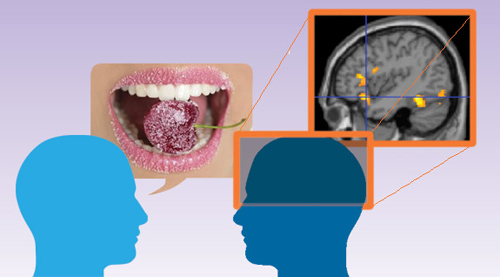 """Researchers from Princeton University and the Free University of Berlin found that taste-related metaphors such as """"sweet"""" actually engage the emotional centers of the brain more than literal words such as """"kind"""" that have the same meaning. If metaphors in general elicit a similar emotional response, that could mean that figurative language presents a """"rhetorical advantage"""" when communicating with others. (Photo illustration by Matilda Luk, Office of Communications)"""