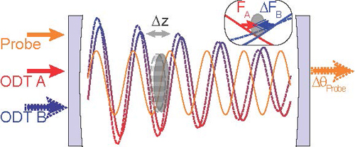 To measure force, a cloud of atoms (gray oval) are trapped in an optical cavity created by two standing-wave light fields, ODT A and ODT B. The amplitude of ODT B is varied to create a force that is optomechanically transduced onto the phase of a probe light for measurement. Image credit: Berkeley Lab