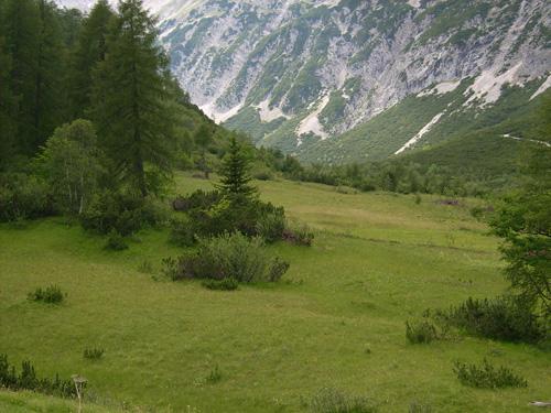 Hier fühlen sich die Falter wohl: Halltal in Nordtirol, in etwa 1800 Meter Höhe. Image credit:  © Thomas Schmitt/Senckenberg