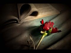 """Ronny: """"Romantik ist für mich in erster Linie, mal was außerhalb der Reihe zu machen. Mal ein Blümchen mitbringen; einfach so ohne Anlass….."""" (Image credit: Atilla Kefeli Source: Flickr)"""