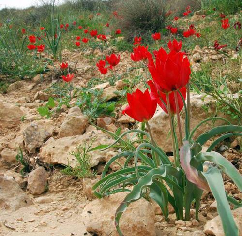 Wüstenpflanzen in Israel. Foto credit: Katja Tielbörger/Universität Tübingen