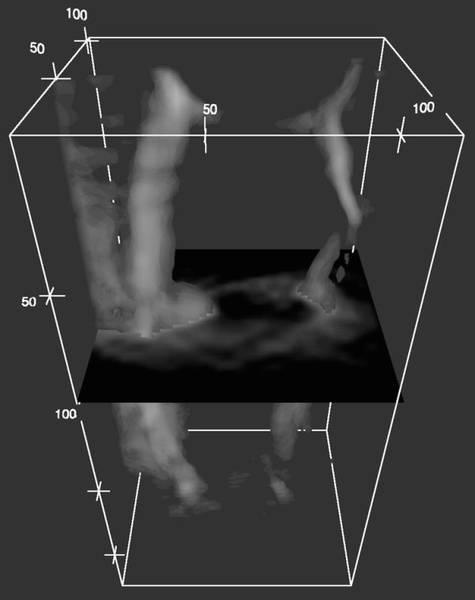 Metall-Carbonyl-Komplexe sind Modellsubstanz für pharmazeutische Wirkstoffe: Die dreidimensionale Darstellung zeigt, wie ein Metall-Carbonyl-Komplex in einer Zelle verteilt ist, mit einem Querschnitt auf Höhe des Zellkerns. Je heller die Darstellung, desto höher die lokale Konzentration der Substanz. Die Anreicherung im Zellkern ist deutlich zu erkennen. (Größe der Zelle: etwa 180x80x40 Mikrometer). Abbildung credit: M. Obst/Universität Tübingen