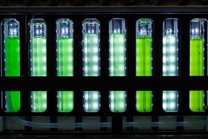 Cyanobakterien im Fotobioreaktor bei unterschiedlichen Lichtintensitäten. Bild Quelle: Dominik Kopp
