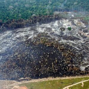 Entwaldung im brasilianischen Regenwald. Image credit: © Juvenal Pereira / WWF-Brazil