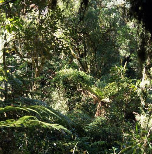 Subtropischer Regenwald in Südbrasilien: Stickstoff brauchen alle Pflanzen. Foto credit: Karl Forchhammer