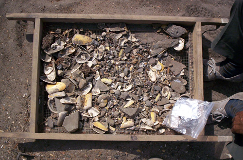 The middens are ancient dumping sites that typically contain a mix of mollusk shells, fish and bird bones, ceramics, cloth, charcoal, maize and other plants. Image credit: M. Carre / Univ. of Montpellier
