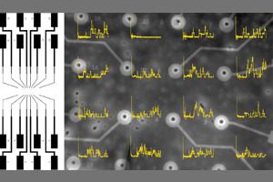 Der Mikrochip (links) und die 16 Mikroelektroden im Zentrum des Chips in Vergrößerung (rechts): Die gelben Linien zeigen den Elektrodenstrom kurz nach Ausbildung der Membranen. Bild Quelle: Arbeitsgruppe für Membranphysiologie und –Technologie