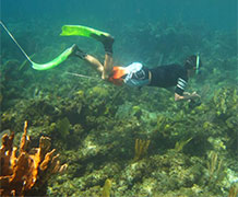Detecting coral reef noise. Image credit: University of Exeter