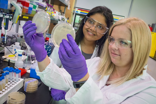Aindrila Mukhopadhyay (left) and Heather Jensen were part of a JBEI team that identified microbial genes which can improve both the tolerance and the production of biogasoline in engineered strains of E. coli. (Photo by Roy Kaltschmidt)