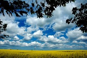 """Bärbel: """"schauen wir nach oben zum blauen Himmel dann sehen wir eine Zukunft die mit Glück und Freude umhüllt ist…."""" (Image credit: Martijn van Exel , Source: Flickr)"""
