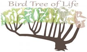 Explore an interactive version of the new bird tree of life: https://news.illinois.edu/infographics/birdtree.html Image credit: Julie McMahon, University of Illinois.