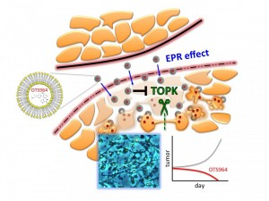 Visualization of drug OTS964 attacking TOPK, a protein produced by a wide range of human cancers that aids in cell division. Image courtesy of The University of Chicago Medicine (Click image to enlarge)