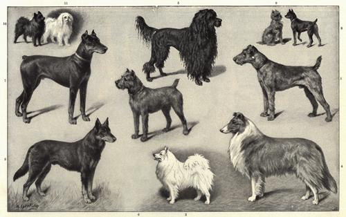 Hunde gibt es in allen Größen und Farben. Obwohl einige Gene identifiziert werden konnten, sind die generellen Mechanismen ihrer Vielfalt nach wie vor ungeklärt. Image credit: © Heinrich Sperling