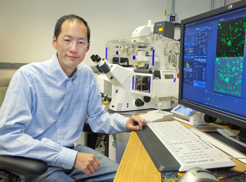 Chris Chang is a faculty chemist with Berkeley Lab and UC Berkeley, and an HHMI investigator. (Photo by Roy Kaltschmidt)