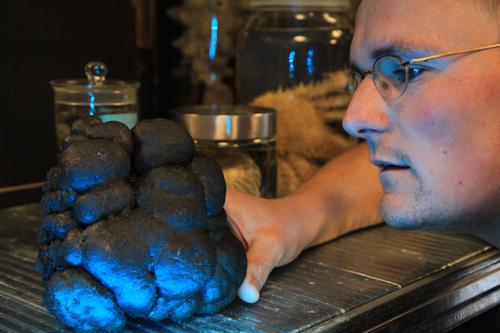 Manganknollen gehören zu den merkwürdigsten Phänomenen, die Forscher bisher in den Ozeanen entdeckt haben. Über die genaue Entstehungsweise der etwa 10 -15cm großen Knollen ist bisher nur wenig bekannt. Foto credit: Viola Siegler, Senckenberg am Meer