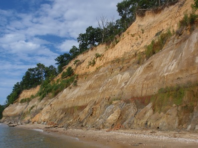 A picture of the Calvert Cliffs. . Image credit: Carnegie Institution of Washington