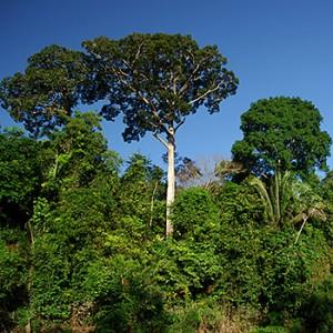 Regenwald im Amazonas. Image credit: © Zig Koch / WWF