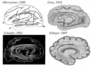 This series of images shows drawings of brain connections that the researchers found in the various atlases they studied. Heinrich Obersteiner's 1888 schematic, Sir Edward Schaefer's 1893 woodblock carving, and Gray's 1918 illustration all show the vertical occipital fasciculus. But Ludwig Edinger's 1885 drawing leaves out the fiber pathway. Image credit: Jason Yeatman (click image to enlarge)