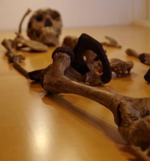 Das 1,5 Millionen Jahre alte Skelett des Turkana Boys, einem frühen Vertreter der Gattung Homo. Besonders der Oberschenkelknochen wird oft für mathematische Größenbestimmungen genutzt, da er der größte Knochen des menschlichen Skeletts ist und einen Großteil des Körpergewichts trägt. Foto credit: Jay Stock