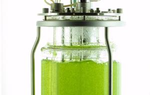 Moosbioreaktor für die Produktion menschlicher Proteine. Bild Quelle: Pflanzenbiotechnologie/Universität Freiburg