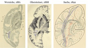 "The first images of the vertical occipital fasciculus, with varying names and abbreviations. Seeing Wernicke's 1881 drawing from a monkey brain was the ""aha"" moment that helped the researchers piece the story together. The drawings by Obersteiner and Sachs are from human brains. Image credit: Jason Yeatman (click image to enlarge)"