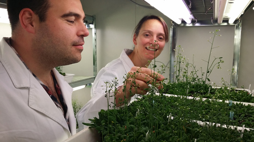 Dr. Monika Doblin, Research Fellow, University of Melbourne (right) and Dr. Edwin Lampugnani, Early Career Researcher, University of Melbourne working on the cell wall synthesis project at the University of Melbourne in collaboration with IBM Research.Image credit: University of Melbourne