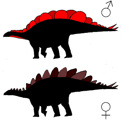 """Of the two plate varieties — short and wide, and tall and narrow — females had one type of plate and males donned the other. Lacking fossil evidence of which sex had which plate type, Saitta supposed that males (top) had the wide plates, which likely served as """"billboard"""" displays males used to attract females. Females (bottom) may have had the tall, narrow plates to defend themselves against predators. (Illustration courtesy of Evan Saitta, University of Bristol)"""