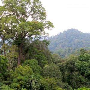 Regenwald auf Sumatra. Image credit: © Fletcher Baylis / WWF