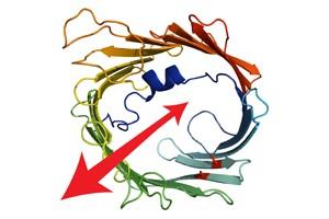 Ein Modell des TOM-Kanals. Modifizierte Abbildung aus Bragoszewski et al.