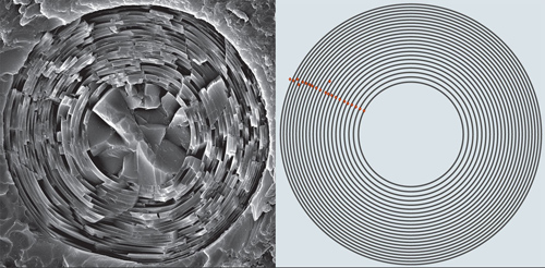 Patterned for strength. A mathematical model, right, predicted that the thickness of nested glass cylinders should decrease from the core to the exterior to optimize strength. Studies of hundreds of spicules, left, showed that was exactly the case in nature. Image credit: Brown University