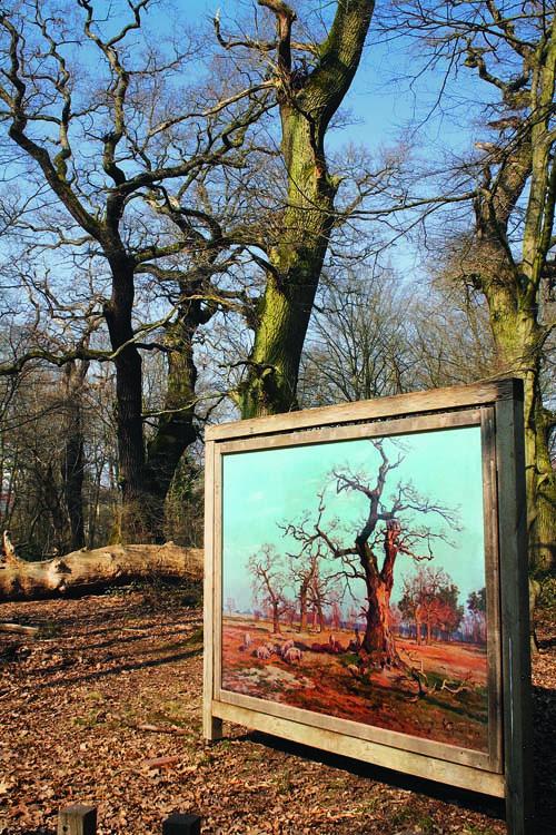 Der Frankfurter Stadtwald - früher und heute: Die Aufgabe der Waldweide führte zum Verlust  von Pflanzenarten. Image credit: © Senckenberg