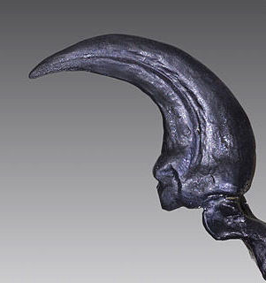 This distinctive sickle-shaped hind claw was the predator's primary weapon. Image credit: Yale University