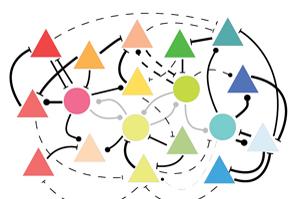 Durch Seherfahrung verstärken sich Verbindungen zwischen Nervenzellen, die auf ähnliche Reize reagieren (dicke Striche), während andere Verknüpfungen abgeschwächt werden (dünne Striche). Bild Quelle: Stefan Rotter / Bernstein Center Freiburg