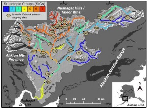 Map of the Nushagak River showing various strontium isotope groups. Image credit: Sean Brennan, UW (click image to enlarge)