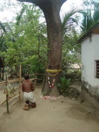 Pilger bei heiligem Neem-Baum. Foto credit: Roland Hardenberg