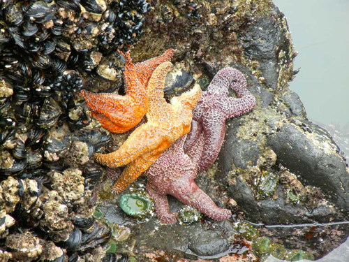 The rocky intertidal, shown here, is one of the ecosystems that ecologists have been studying for decades to learn about how different species interact. (Photo credit: Judith Bronstein)