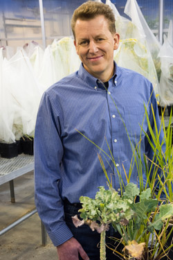 Chris Pires in his greenhouse in the Bond LSC. The plants in the background are covered with bags to keep their pollen from pollinating neighbor plants. Image credit: University of Missouri