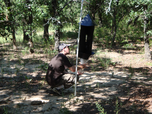 Researcher Robert Mitchell examines a pheromone-baited trap to see whether it attracted longhorned beetles from the nearby trees. Beetles that fly into the 4-foot-tall trap are funneled into the jar at the base of the trap. (Photo credit: Forrest Mitchell)
