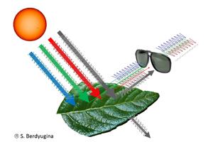Das vom Blatt reflektierte polarisierte Licht enthält einen Fußabdruck von den Biopigmenten des Blatts. Mit einem Polarisationsfilter, hier als Brille dargestellt, sind diese Biosignaturen nachweisbar. Grafik credit: Svetlana Berdyugina