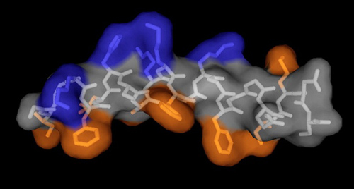 Peptoids are chainlike structure of non-natural amino acids that can be assembled to carry out very specific functions, such as fighting harmful microbes. (Image credit: Annelise Barron)