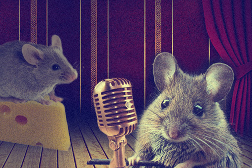 """Brain science researcher Joshua Neunuebel uses ultrasonic microphones to collect and analyze high-frequency mouse """"songs."""" Illustration by Jeffrey Chase"""