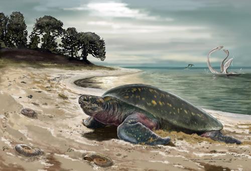 So könnte der Lebensraum der Meeresschildkröte vor 120 Millionen Jahren ausgesehen haben. Image credit: © Jorge Blanco