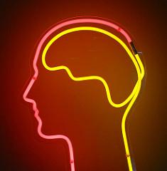 Mehr als die Größe scheinen strukturelle Unterschiede für unterschiedliche Intelligenzleistungen verantwortlich zu sein (Image credit: Dierk Schaefer, Source: Flickr)