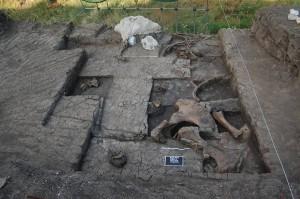 Ansicht der Ausgrabungsfläche mit einem Teil der freigelegten Elefantenknochen. Im Hintergrund ist der mit einer Gipspackung gesicherte Schädel zu erkennen. Foto credit: Griechisches Kultusministerium. (Click image to enlarge)