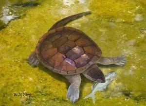 Lebendrekonstruktion der Schildkröte Xiaochelys ningchengensis im Süßwasser beim Erbeuten eines kleinen Fisches (Lycoptera), der in der gleichen Schicht gefunden wurde wie die Schildkröte. Abbildung credit: W. S. Wang