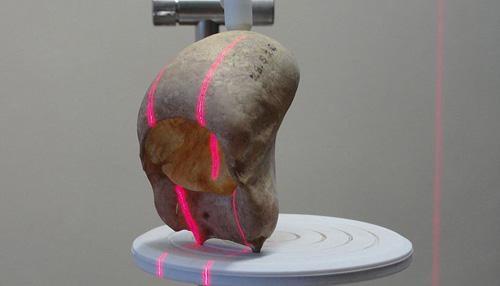 Mittels 3D-Laseroberflächenabtastung wurden die Zungenbeine von Brüllaffen untersucht (Image copyright: Jacob Dunn).