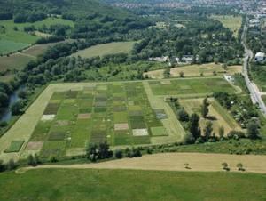 Luftbildaufnahme des Jena Experiments in der Saaleaue. Foto credit: Alexandra Weigelt/Universität Leipzig