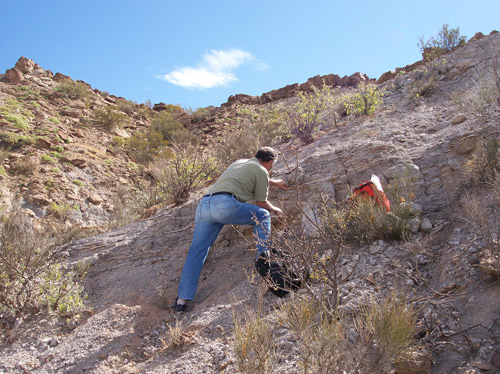 Co-author Farid Chemale samples a volcanic ash layer (tuff) in the Chañares Formation for radioisotopic dating. PHOTO CREDIT: Adriana Mancuso